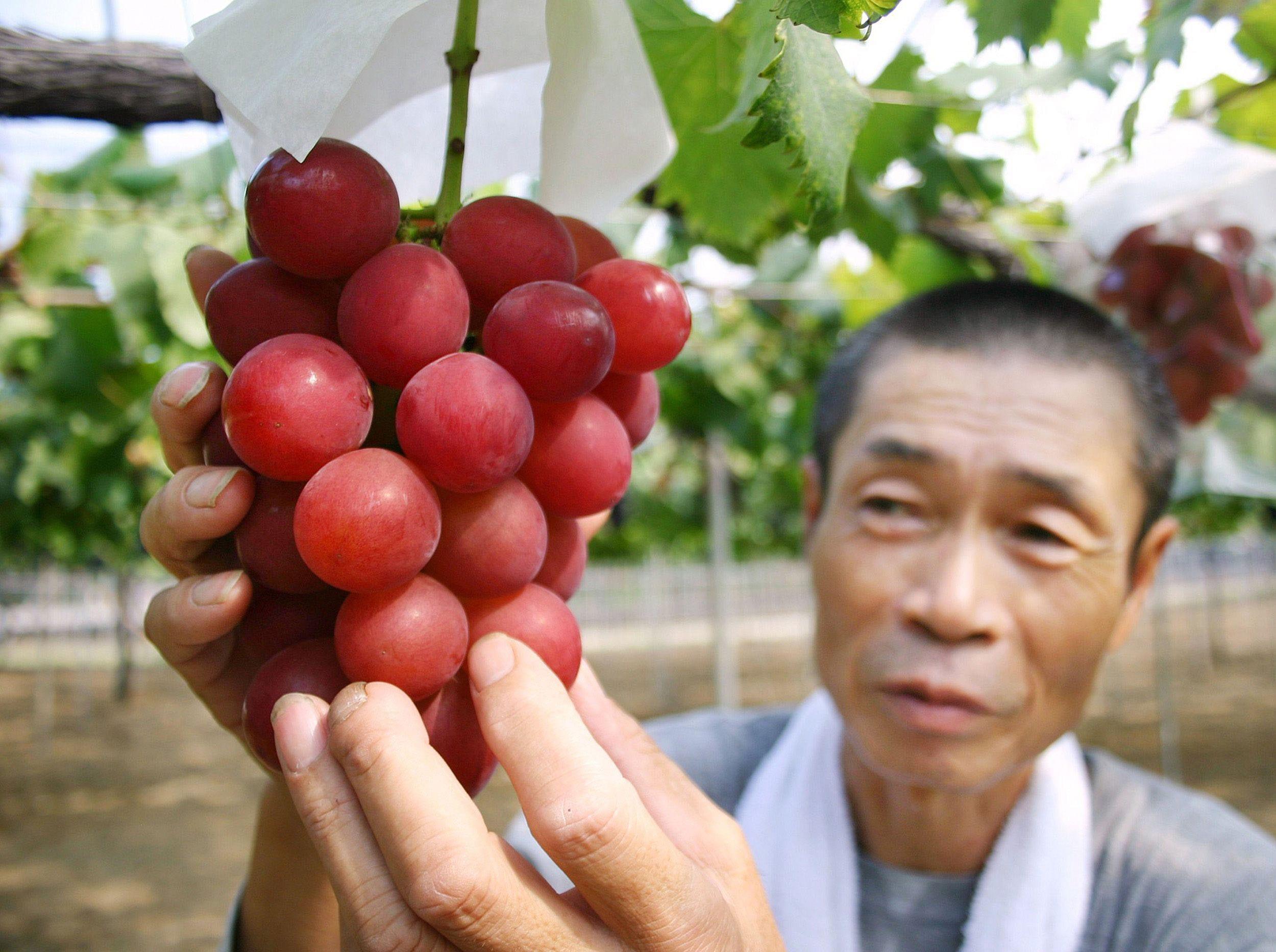 Самый вкусный сорт винограда